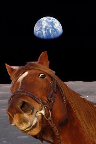horseonmoon